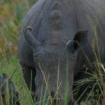 Ruparelia-Foundation-names-new-babay-rhino