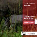 Uganda's newest baby rhinoceros named Rae Ruparelia-ruparelia-foundation
